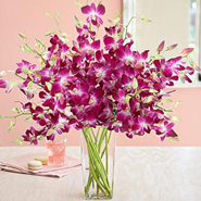 Radiant Orchids