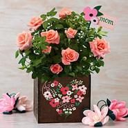 Moms Rose Garden
