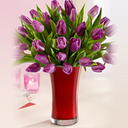 30 Purple Tulip