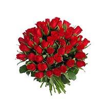 Elegent Roses