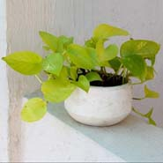 Decourous  White Planter