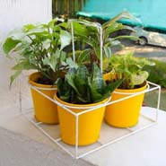 Yellow Bucket Planter