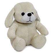 Cute Puppy Teddy