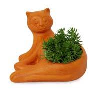 Sedum Plant In Designer Vase