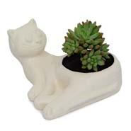 Succulent Indoor Plant