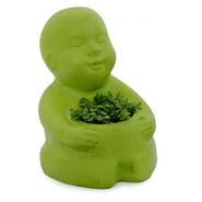 Sedum Plant In Baby Planter