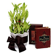 Bamboo Plant N Bhagavad Gita