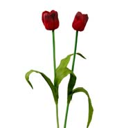 Artificial Tulip Sticks
