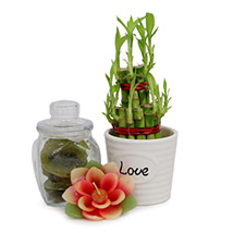 Flower Candle N Lucky Bamboo