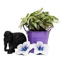 Syngonium Plant with Elephant