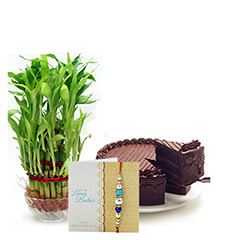 Lucky Bamboo With Cake