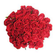 15 Red Roses in Cellophane-SA