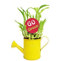 Go Green Bamboo