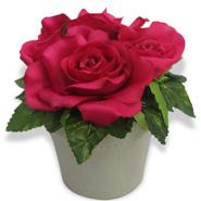 Lovely Vase & Roses