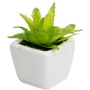 True Décor Plant