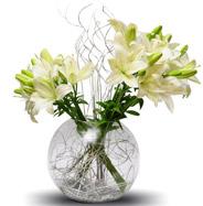 Lily celebration