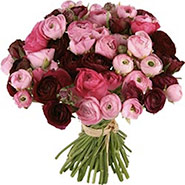 Marvellous Ranunculus